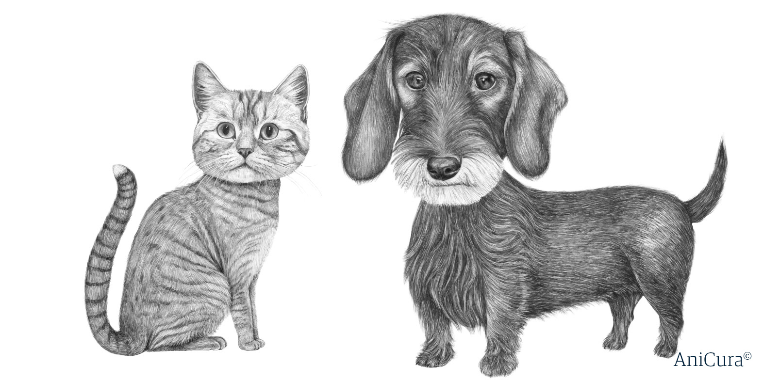 Illustration katt och tax hund
